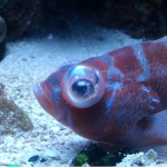 Example of Pop-eye